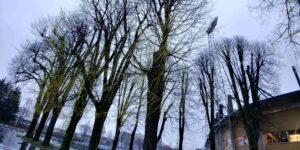 Gele bomen in Tilburg (2017)